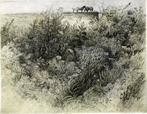 Blooming Meadow 2